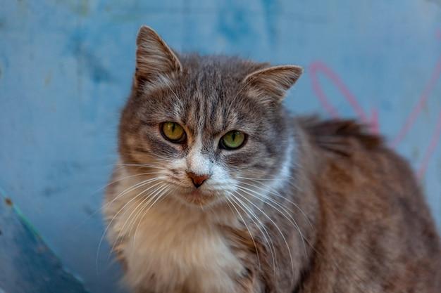 Ein katzenportrait. katzengesicht hautnah auf der straße. katzennase und augen