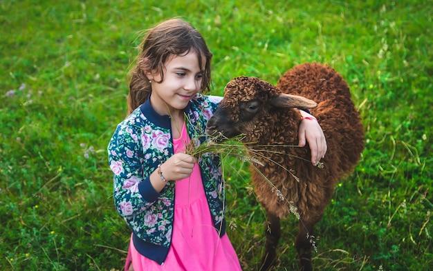 Ein kind füttert ein schaf auf einer wiese