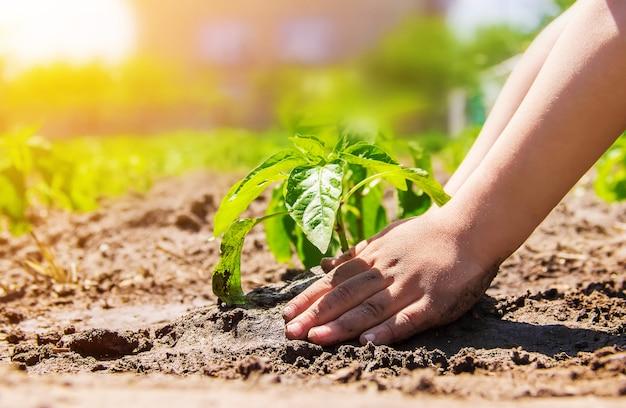 Ein kind pflanzt eine pflanze im garten. selektiver fokus