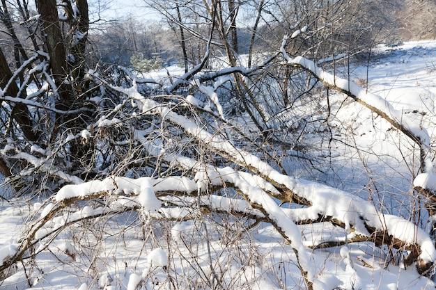 Ein kleiner fluss, dessen wasser im winter gefroren ist, ein gefrorener fluss bei winterfrösten, schnee und frost in der natur im winter in der nähe eines flusses oder sees