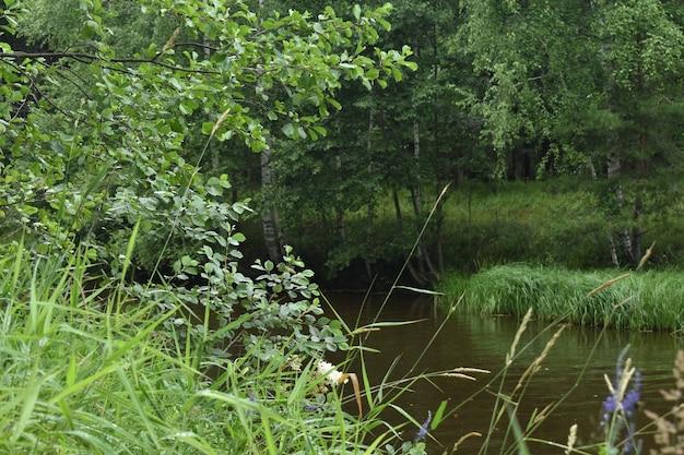 Ein kleiner fluss fließt durch den wald