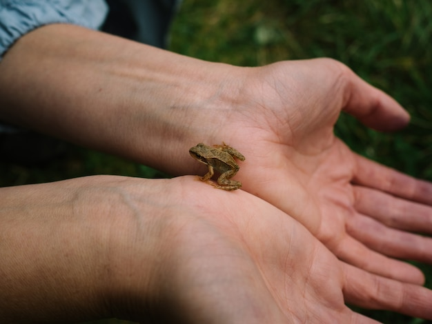 Ein kleiner frosch an den händen von mädchen