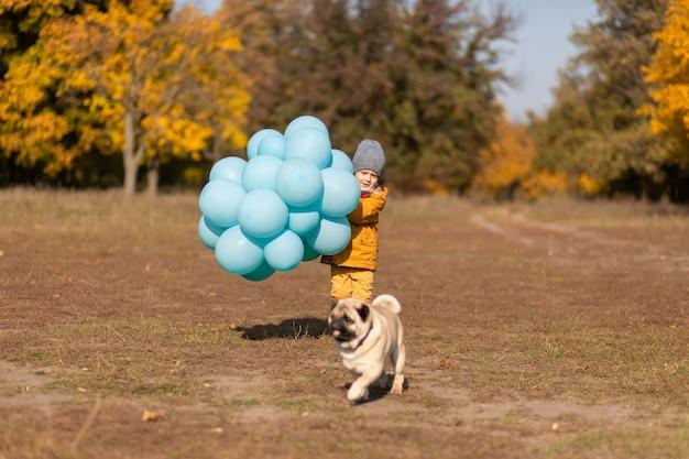 Ein kleiner junge mit einem armvoll ballons und einem mops geht im herbstpark spazieren. gelbe bäume und blaue kugeln. stilvolles kind. glückliche kindheit.