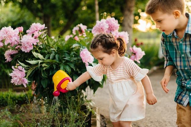 Ein kleiner junge mit seiner schwester, die schöne rosa pfingstrosenblumen während des sonnenuntergangs im garten wässert und lächelt. landwirtschaft, gartenarbeit.