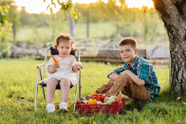 Ein kleiner junge und ein kleines mädchen sitzen unter einem baum im garten mit einer ganzen schachtel reifem gemüse bei sonnenuntergang. landwirtschaft, ernte. umweltfreundliches produkt.