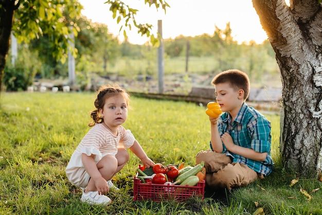 Ein kleiner junge und eine kleine frau sitzen unter einem baum im garten mit einer ganzen schachtel reifem gemüse bei sonnenuntergang.