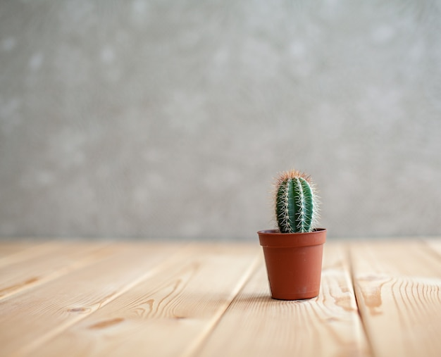 Ein kleiner kaktus in einem braunen topf auf einem holztisch home interior design