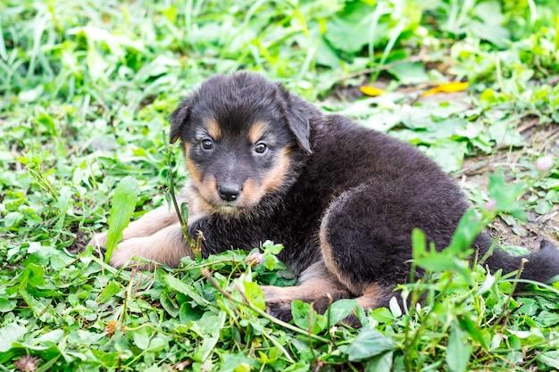 Ein kleiner schwarzer einsamer welpe sitzt im gras