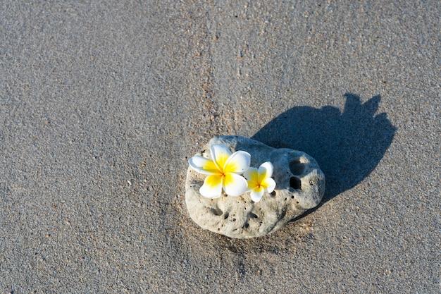 Ein kleiner stein von interessanter glatter form wird am strand von wellen gewaschen.