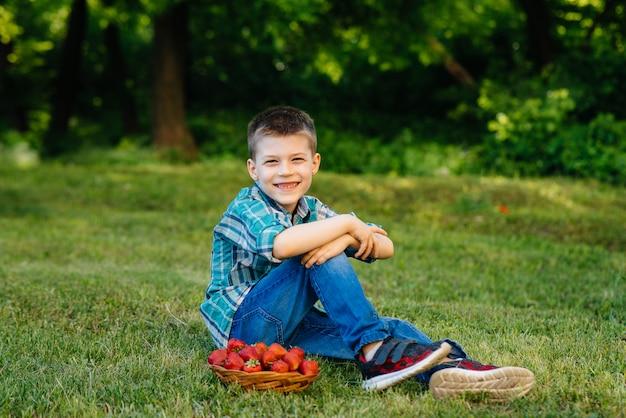 Ein kleiner süßer junge sitzt mit einer großen schachtel reifer und köstlicher erdbeeren. ernte. reife erdbeeren. natürliche und köstliche beere.