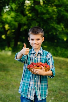 Ein kleiner süßer junge steht mit einer großen schachtel reifer und köstlicher erdbeeren. ernte. reife erdbeeren. natürliche und köstliche beere.