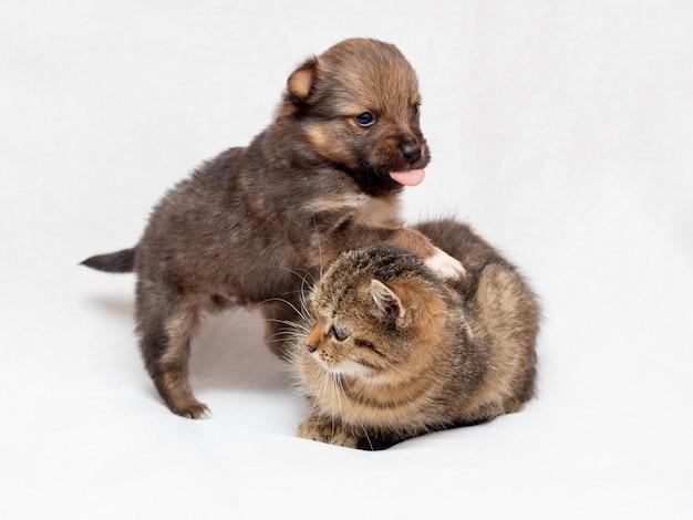 Ein kleiner welpe spielt mit einem kätzchen. kätzchen und welpe zusammen auf hellem hintergrund