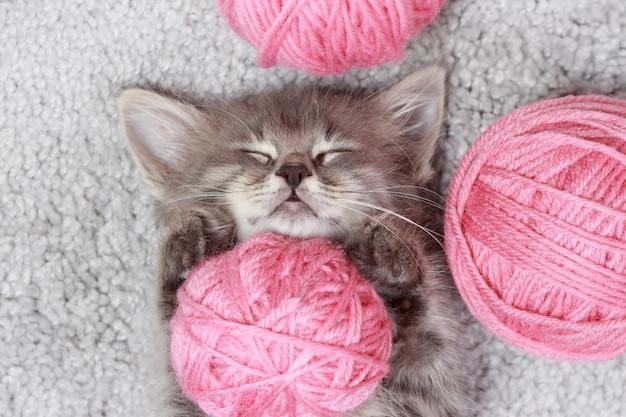 Ein kleines flauschiges graues kätzchen schläft mit rosa wollknäueln
