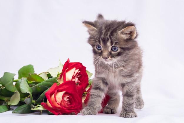 Ein kleines flauschiges kätzchen in der nähe eines rosenstraußes. blumen für grüße mit dem urlaub