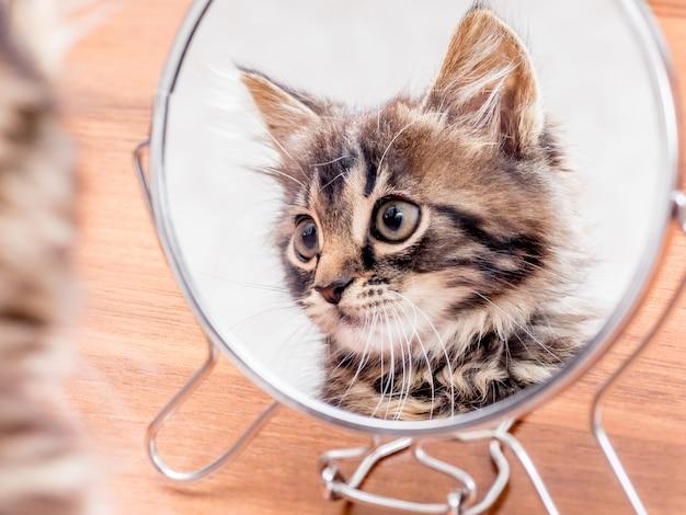 Ein kleines gestreiftes kätzchen wird in einem spiegel angezeigt. es ist wichtig, dass sie ihr aussehen überwachen