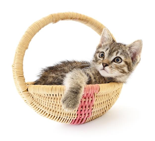 Ein kleines graues kätzchen, das in einem korb sitzt