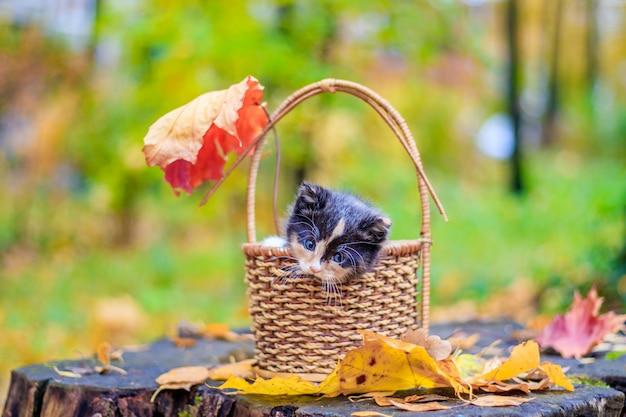 Ein kleines kätzchen auf dem weg mit blättern. kätzchen auf einem spaziergang im herbst. haustier.