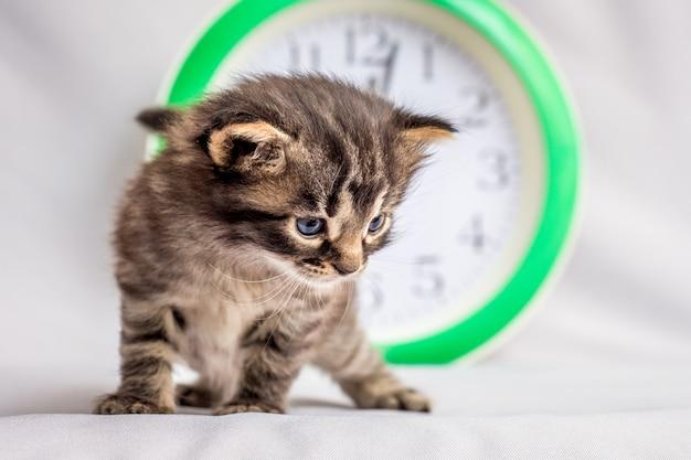 Ein kleines kätzchen in der nähe der uhr. beobachten sie die uhr und sparen sie zeit
