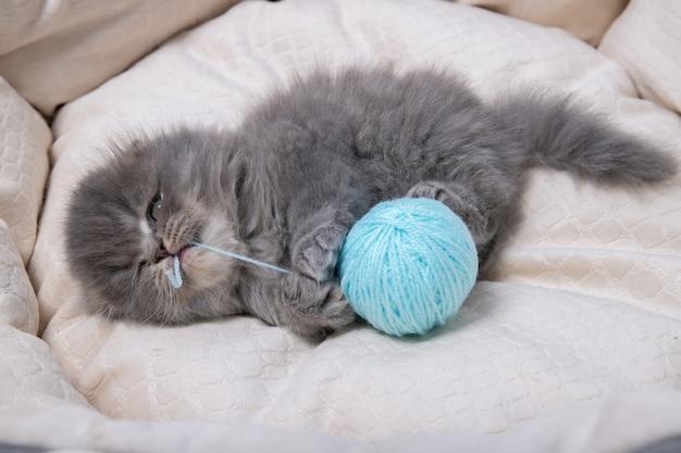 Ein kleines kätzchen liegt auf einem katzenbett und spielt mit einem fadenball