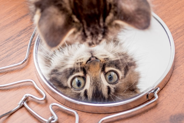 Ein kleines kätzchen schaut in den spiegel, die draufsicht. zeigt kätzchen im spiegel an