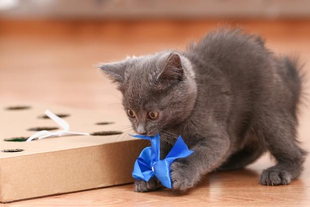 Ein kleines kätzchen spielt mit interaktiver handgemachter spielzeug-pappschachtel mit löchern und katzenspielzeug im inneren