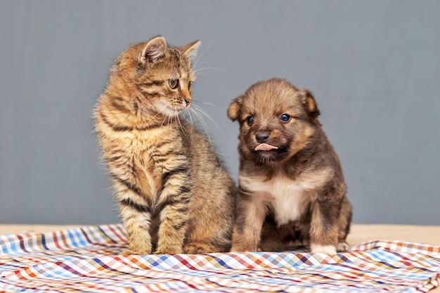 Ein kleines kätzchen und ein kleiner welpe sitzen nebeneinander im zimmer