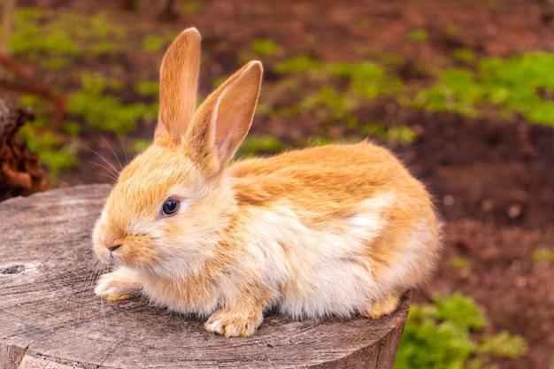 Ein kleines kaninchen sitzt im grünen gras
