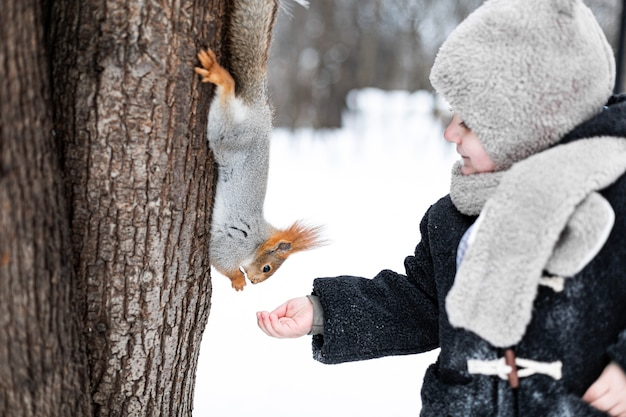 Ein kleines kind füttert im winter ein eichhörnchen mit einer nuss. netter kleiner junge, der eichhörnchen im winterpark füttert.