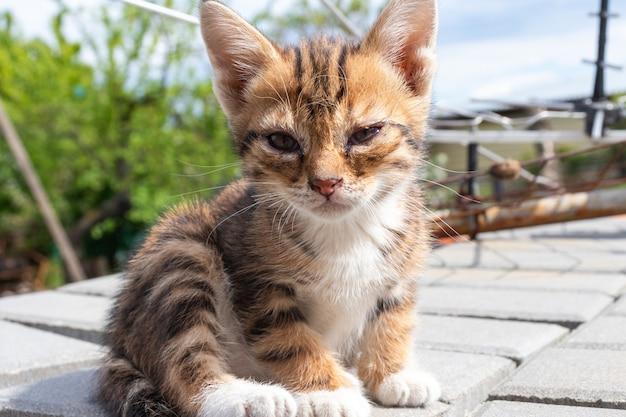 Ein kleines krankes kätzchen, das auf der straße sitzt ein kleines obdachloses kätzchen verhungert und krank allein auf der straße.
