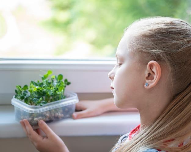 Ein kleines mädchen am fenster beobachtet, wie mikrogrüne erbsen wachsen