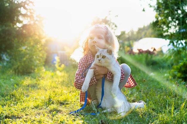Ein kleines mädchen geht mit einer großen weißen schottischen katze mit geraden ohren in der natur, liebe zu tieren