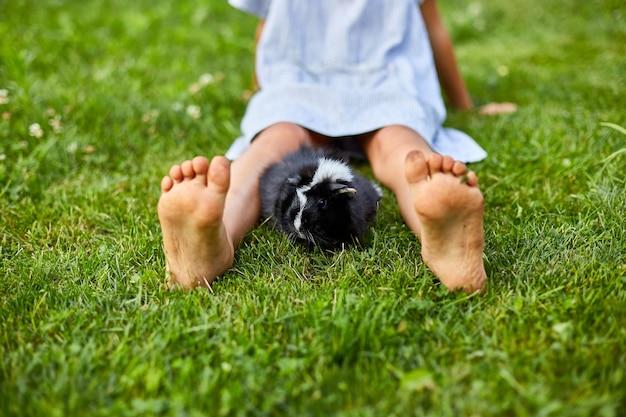 Ein kleines mädchen spielt mit dem schwarzen meerschweinchen, das im sommer draußen sitzt Premium Fotos