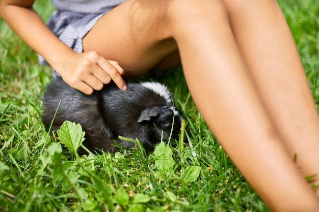 Ein kleines mädchen spielt mit schwarzem meerschweinchen, das im sommer im freien sitzt, pet calico meerschweinchen weidet im gras des hinterhofs seines besitzers Premium Fotos