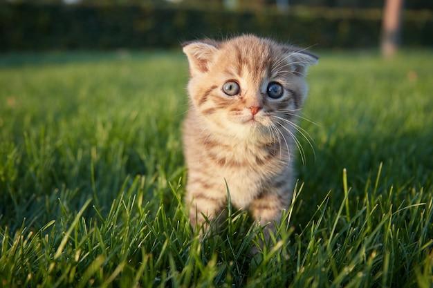 Ein kleines rotes kätzchen im grünen gras sitzt und schaut in die richtung des fotografen