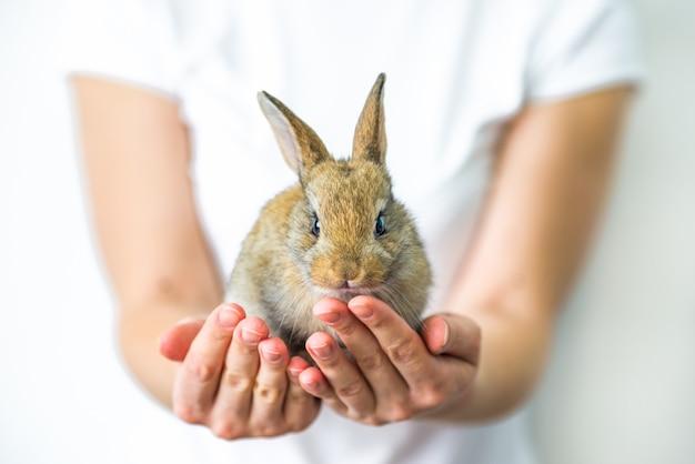 Ein kleines rotes kaninchen in menschlichen händen.