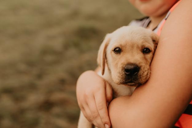 Ein kleines weißes hündchen labrador liegt in den armen eines jungen eines kindes