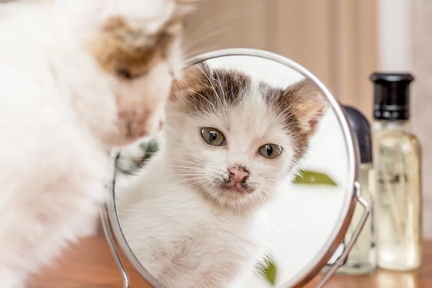 Ein kleines weißes kätzchen schaut in den spiegel. reflexionskatze ist im spiegel