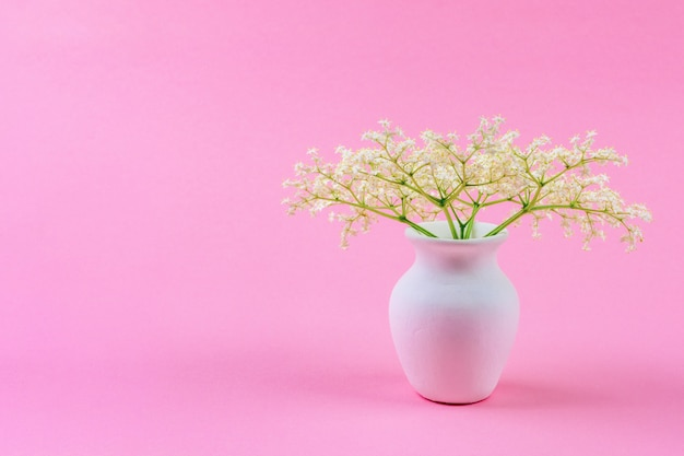 Ein kleines zartes bouquet von weißen holunderblüten in einem weißen krug auf einem pastellrosa