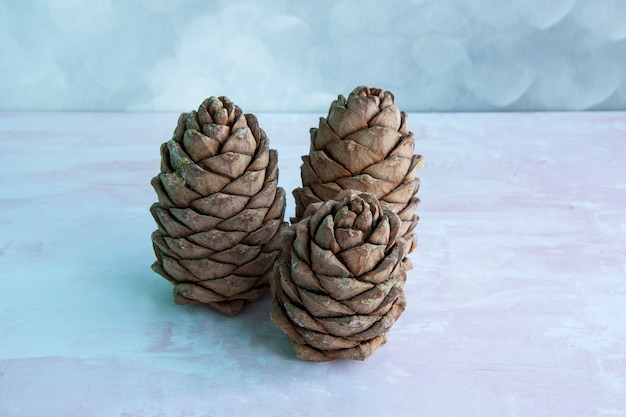 Ein klumpen zedernholz, bedeckt mit nüssen. sibirischer tannenzapfen. brauner großer tannenzapfen auf dem tisch