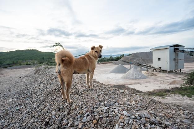 Ein konkreter fabrikhund