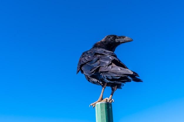 Ein krähenvogel auf einem straßenschild über blauem himmel