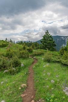 Ein kurvenreicher pfad führt durch den wald zwischen den hohen bergen.