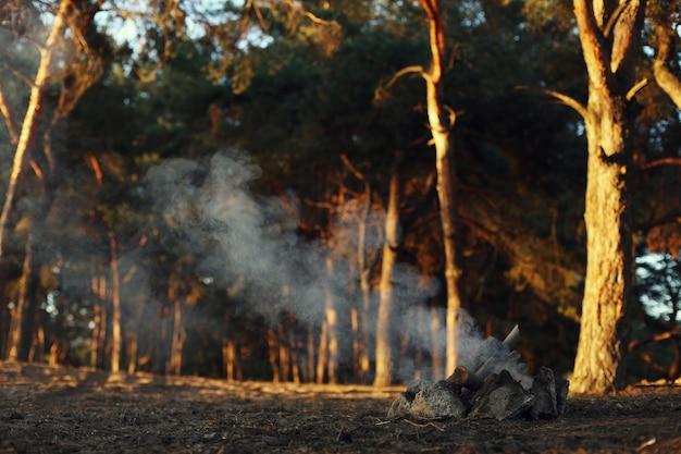 Ein lagerfeuer in einem kiefernwald, rauchen ohne feuer.