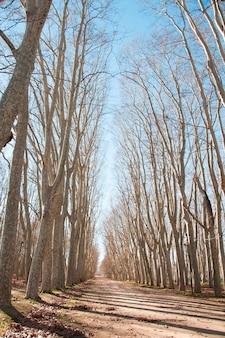 Ein landweg, umgeben von bäumen
