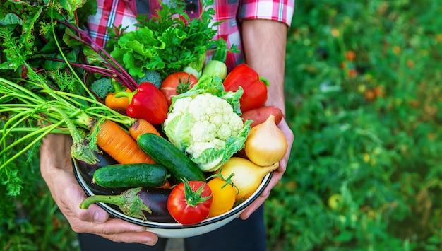 Ein landwirt hält eine gemüseernte in den händen. selektiver fokus. natur.