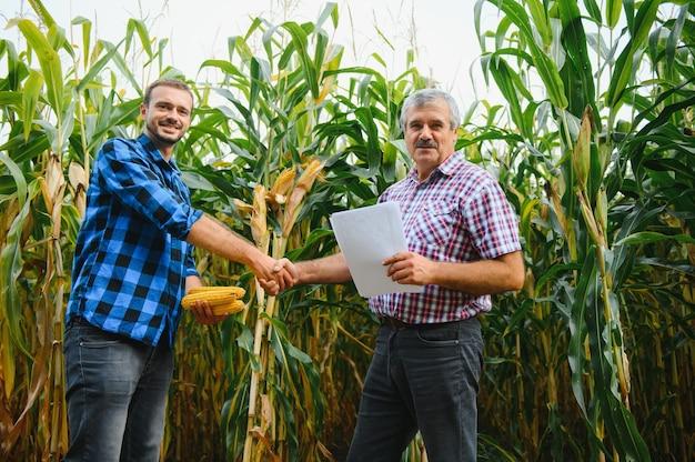 Ein landwirt und ein agrarwissenschaftler, der im feld arbeitet, kontrollieren reifende maiskolben. zwei geschäftsmann prüft die reifung von maiskolben. konzept des landwirtschaftlichen geschäfts. ich arbeite als geschäftsmann in der landwirtschaft