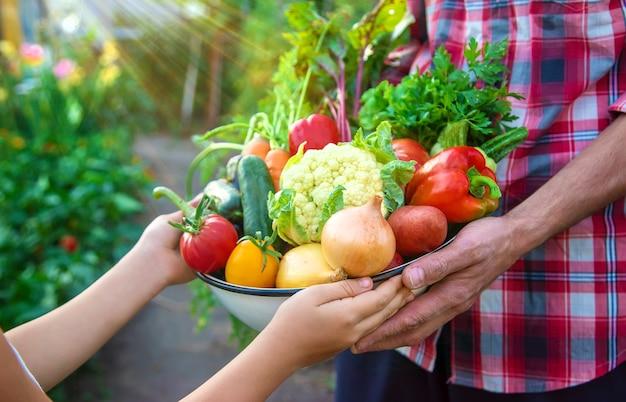 Ein landwirt und ein kind halten eine gemüseernte in den händen. selektiver fokus. natur.