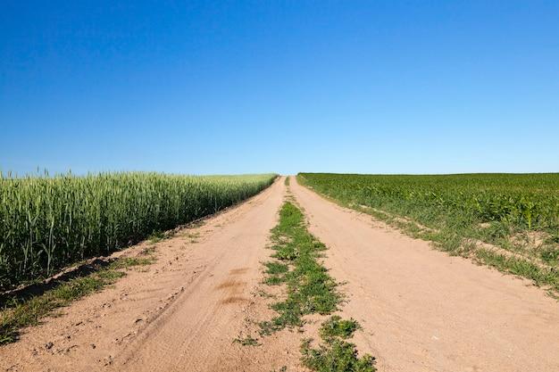 Ein landwirtschaftliches feld, auf dem die ernte der produkte wächst, die für die ernährung von menschen oder tieren erforderlich sind