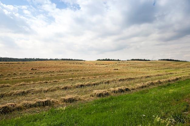 Ein landwirtschaftliches feld, auf dem die rapsernte durchgeführt wurde