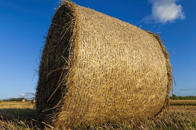 Ein landwirtschaftliches feld, auf dem getreide, weizen oder roggen landwirtschaftliche tätigkeiten ausüben